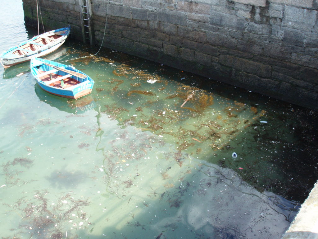 Floating marine litter in port areas - courtesy of CETMAR