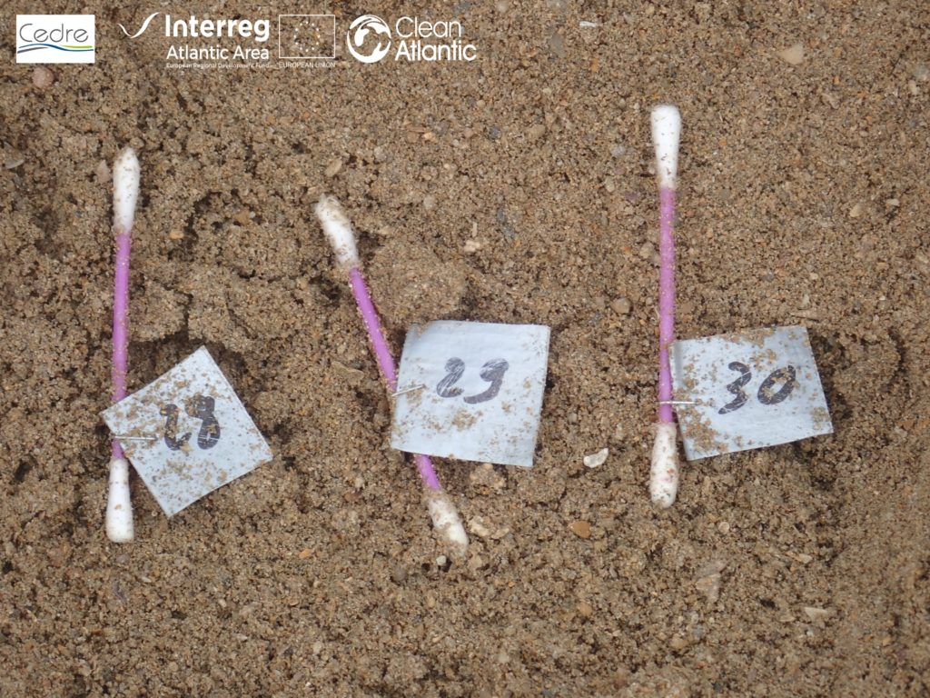Assessing the impact of marine litter